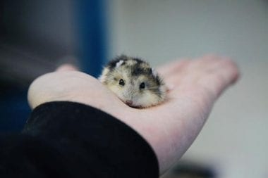 Hamster baby sitting on a palm
