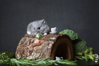 Small gray hamster atop a wooden log